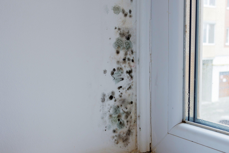 humidity-indoor-mould-is-129349088